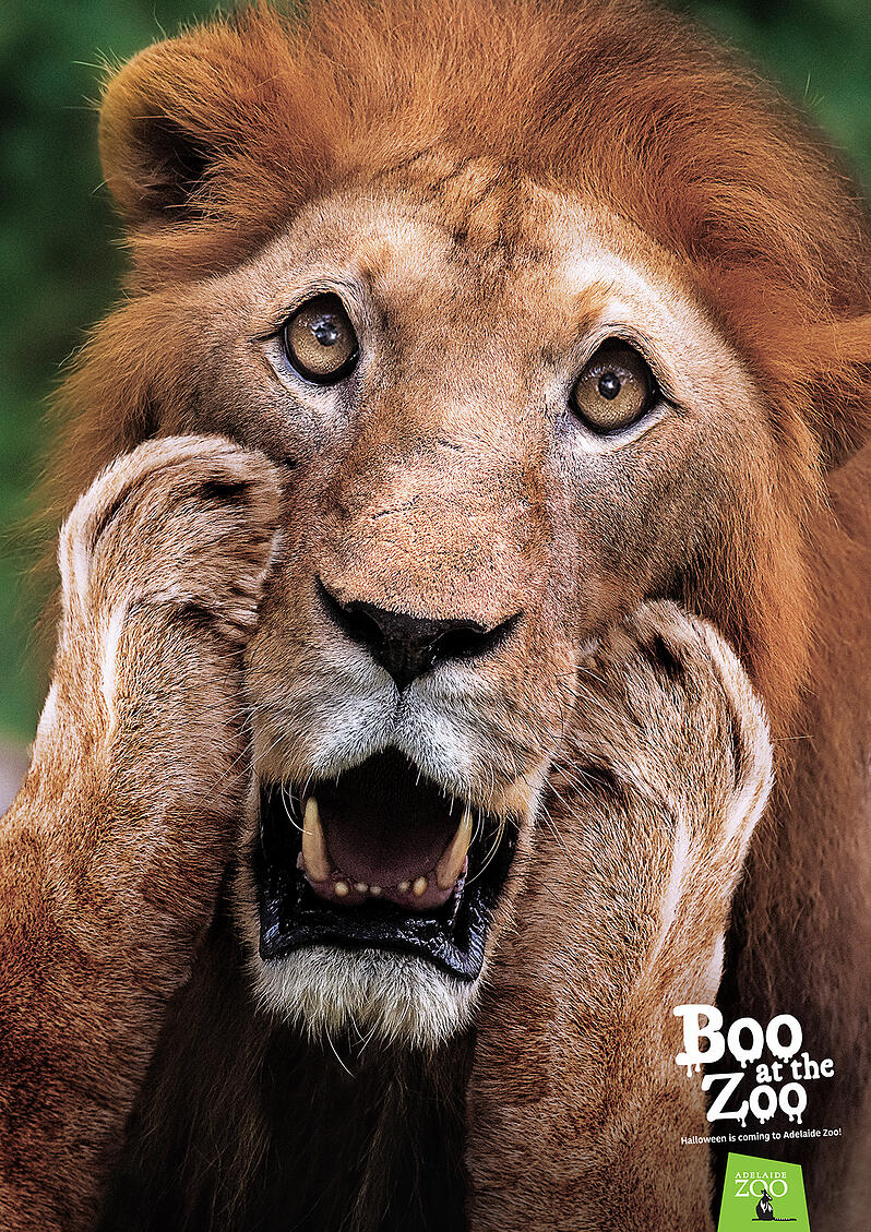 Zoos SA_Boo at the Zoo poster_Lion 1200px