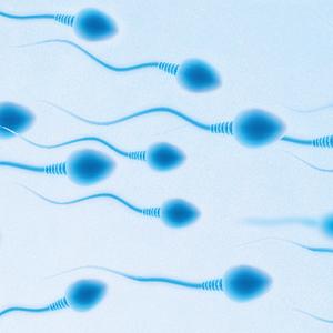 FertilitySA.png