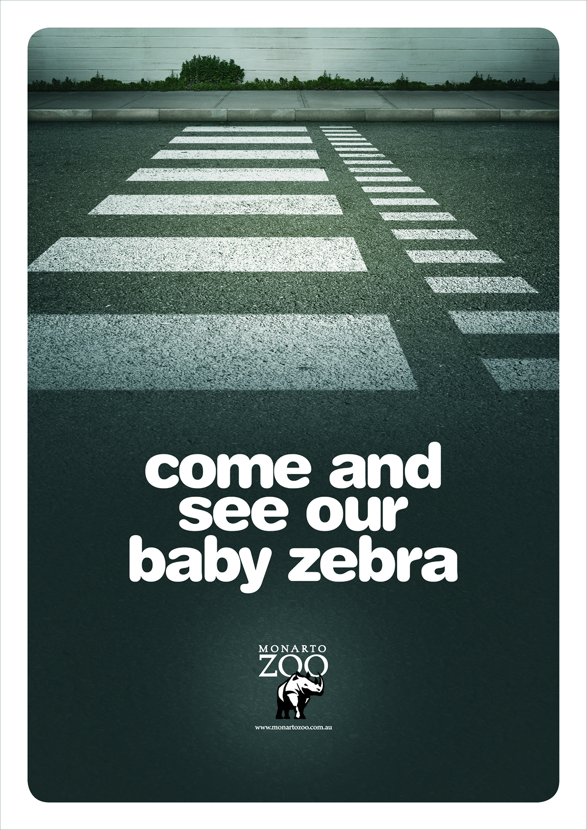 Zebra Baby 1200px