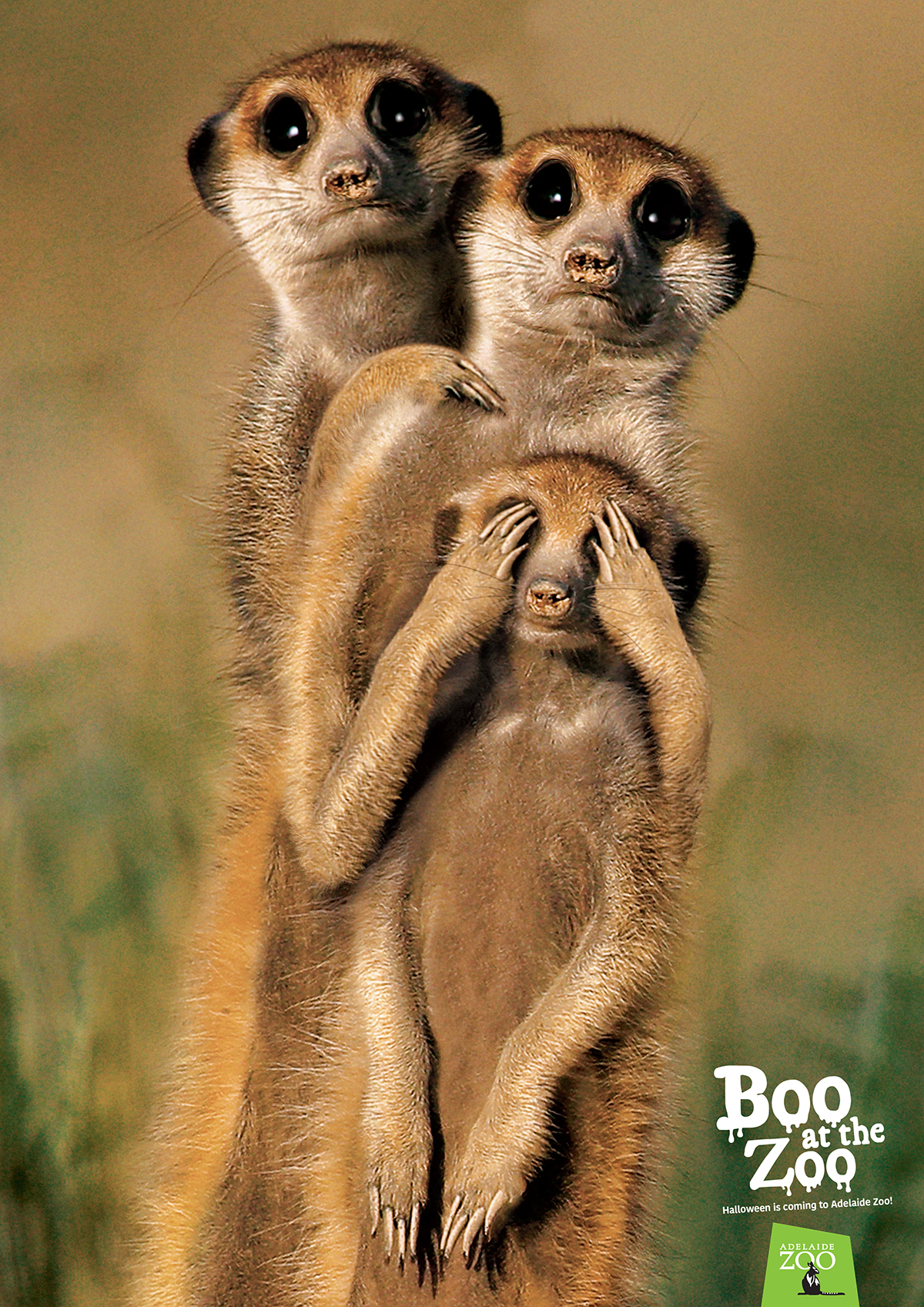 Zoos SA_Boo at the Zoo poster_Meerkat 1200px