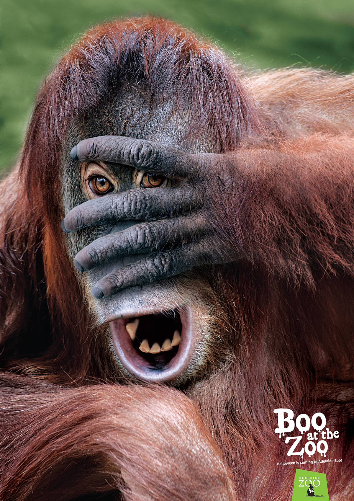 Zoos SA_Boo at the Zoo poster_Orangutan 1200px